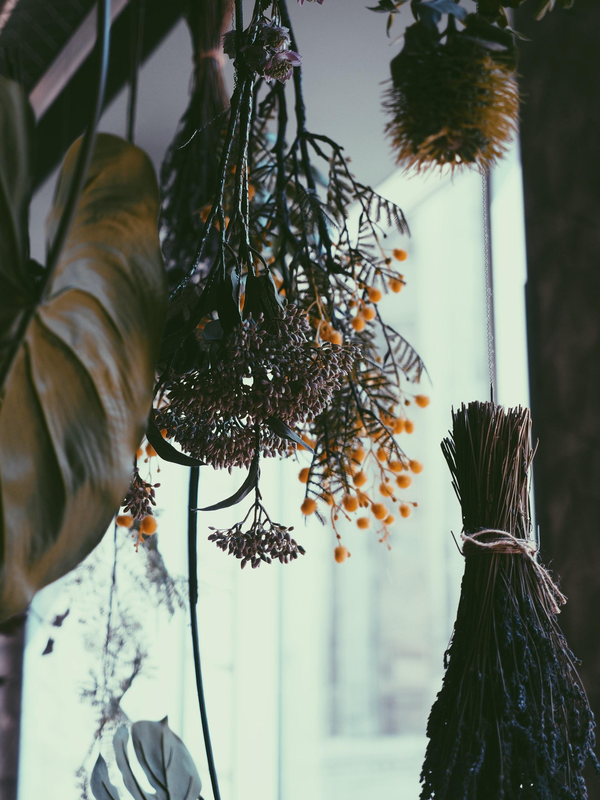 Fleurs séchées – Libre droit ( unsplash)