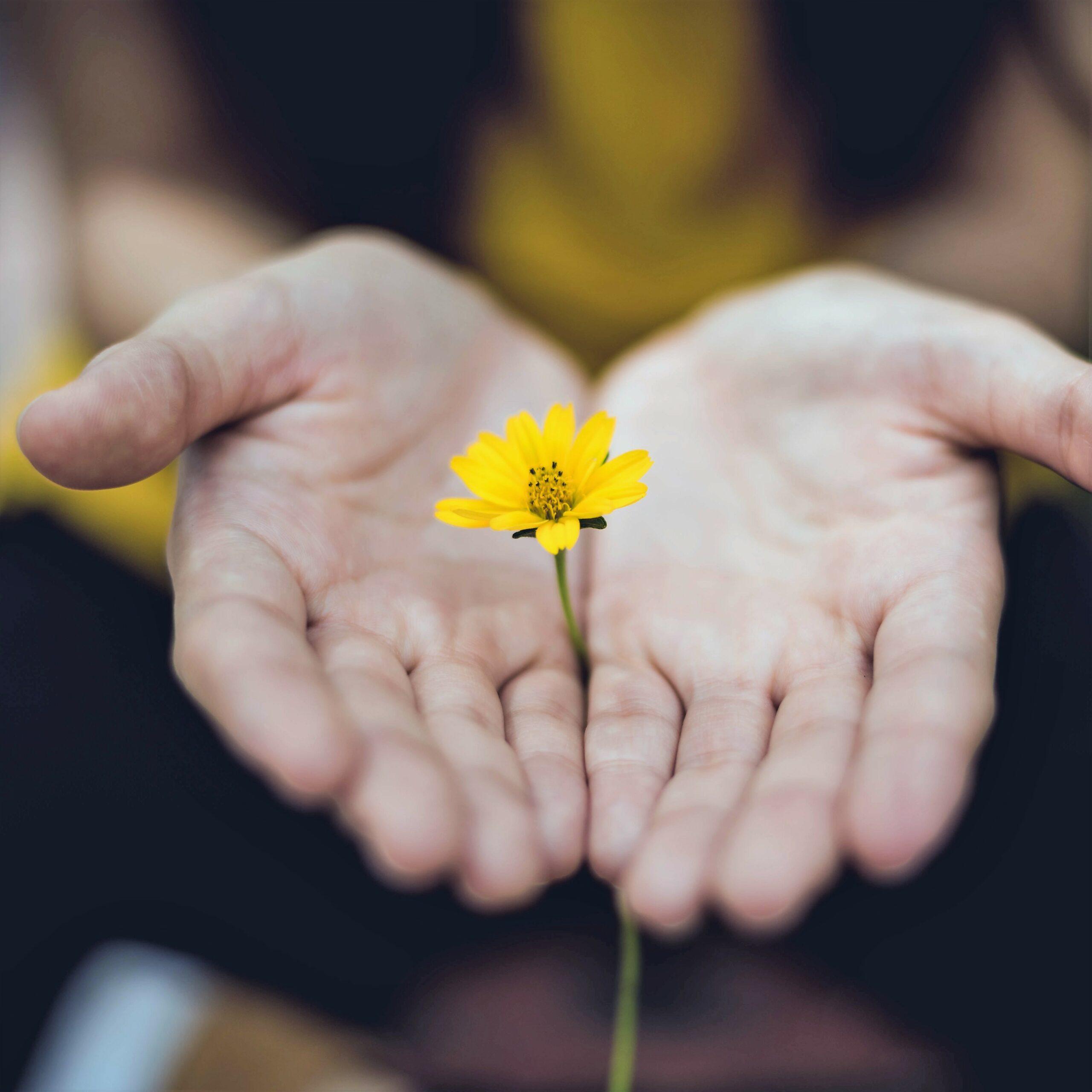 Se recentrer – Fleur